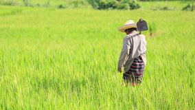 Old farmer holding spade at rice field Royalty Free Stock Photo