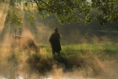 Old farmer lead the cattle under the ancient banyan tree stock image