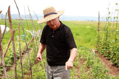 Old farmer man explains how to cultivate stock photo