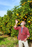 Old farmer tosses orange fruit Stock Photo