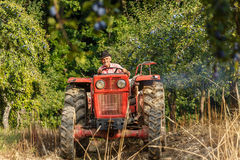 Old farmer with tractor harvesting plums Stock Photos