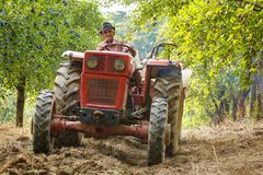 Old farmer with tractor harvesting plums Royalty Free Stock Image