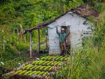 The farmers greeting. Old farmer waving from his little hut behind his garden Royalty Free Stock Image