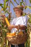 Old farmer woman with maize Royalty Free Stock Photo