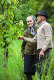 Old farmers couple in the orchard Stock Image