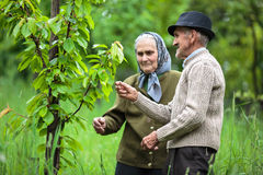Old farmers couple in the orchard Stock Images