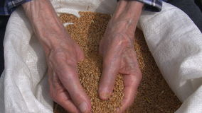 Old farmers hands stock video footage