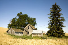 Old Farmhouse in the Country. Abandoned House in the mist of a wheat field Royalty Free Stock Photography