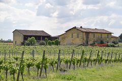An old farmhouse and its vineyard in the Brescia countryside - Italy. An old farmhouse surrounded by its vineyard in the Brescia countryside - Lombardy - Italy stock photography