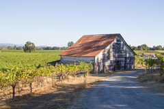 Old Farmhouse in the middle of the vineyards. An old farmhouse sitting in the middle of the vineyards in California Stock Photo