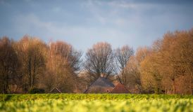 Old farmhouse surrounded by winter trees on the horizon of rapeseed field. Lit by low sunlight. Dark cloudy sky Royalty Free Stock Photos