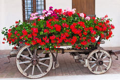 Old-fashined trolley with geranuim. Old-fashioned trolley  covered with  flowers geranium Stock Photo