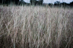 Old-Fashion,Grass Royalty Free Stock Photography