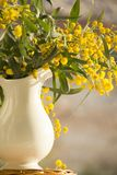 Old Fashion Pitcher with yellow spring mimosa Royalty Free Stock Images