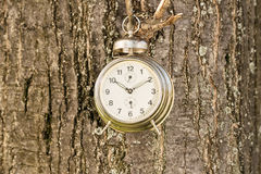 Old fashioned clock hanged on a tree Stock Photography
