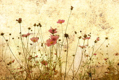 Old-fashioned flower. In France Stock Images
