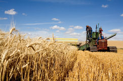 Old fashioned harvesting. Stock Images