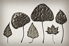 Old-fashioned herbarium background Royalty Free Stock Photography