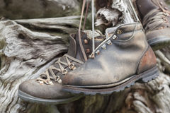 Old-fashioned hiking shoes hanging on trunk. Stock Images