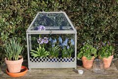 Old fashioned mini greenhouse Stock Images