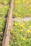 Old fashioned railway tracks Stock Photo