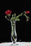 Old-fashioned Rose in Crystal Vase Royalty Free Stock Images