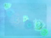 Old fashioned roses on grunge colorful background royalty free stock photos