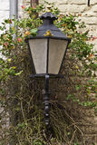 Old fashioned street lamp growing through vines Royalty Free Stock Photo