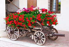Old-fashioned trolley with geranium. Old-fashioned trolley covered with flowers geranium royalty free stock photography
