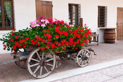 Old-fashioned trolley with geranuim. Old-fashioned trolley  covered with  flowers geranium Royalty Free Stock Images