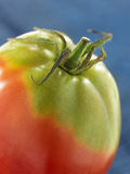 Old-fashioned variety of organic tomato Stock Image
