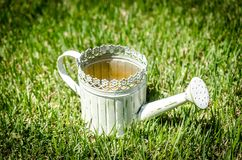 Old-fashioned watering can in the grass Stock Image