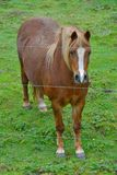 Old fat sweet beautiful horse. Behind thin wires Stock Photo