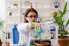 The old female biotechnology chemist working in the lab. Old female biotechnology chemist working in the lab stock images