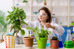 The old female biotechnology chemist working in the lab. Old female biotechnology chemist working in the lab royalty free stock images