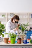 The old female biotechnology chemist working in the lab. Old female biotechnology chemist working in the lab stock photos