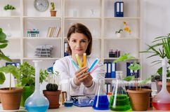 The old female biotechnology chemist working in the lab. Old female biotechnology chemist working in the lab royalty free stock photography