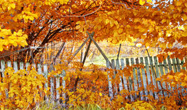 Old fence in autumn Royalty Free Stock Photos