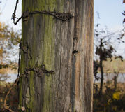 Old fence with barbed wire close up photo. Beautiful picture, ba Stock Image