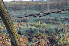Old fence with barbed wire Royalty Free Stock Photo