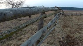 Old fence in the field in early spring stock video footage