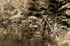 The old fence in Harz sepia 2 Stock Photo