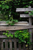 Old fence and hop Stock Photography