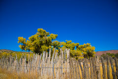 Old Fence In Horse Country Royalty Free Stock Photo