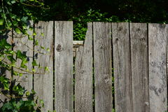 OLD FENCE. IVY OVERTAKING THE BROKEN GARDEN FENCE Stock Photos