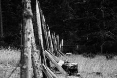 Old Fence with Moss in Black and White stock photography