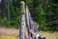 Old Fence with Moss stock photo