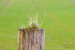 Old fence post Royalty Free Stock Photos