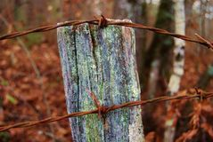 Old fence post Royalty Free Stock Image