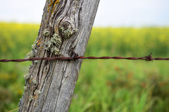 Old Fence Post and Barbed Wire Royalty Free Stock Photography
